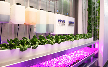 Shipping Containers - hydroponics